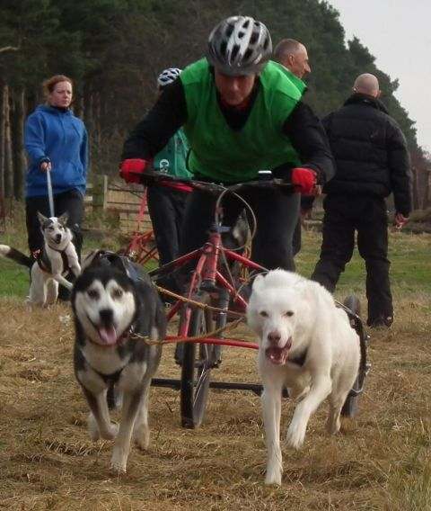 Nick Stone competing in a competition with Siberian husky dogs Max and Nico