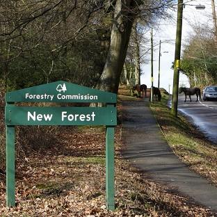 The Wiggle New Forest Spring Sportive cycle took a route through the national park