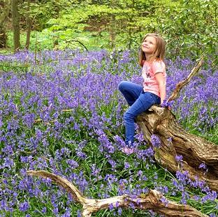 Mid Devon Star: Kadie Lane, five, plays amongst the bluebells in Witton Country Park, Blackburn, Lancashire