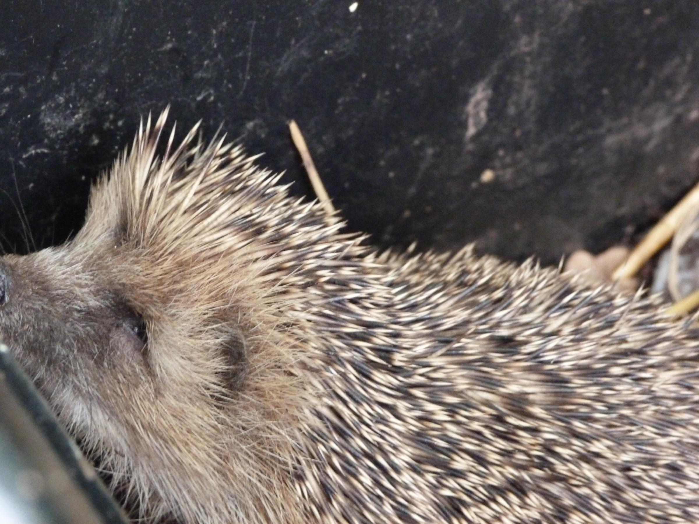 Spikey on the mend