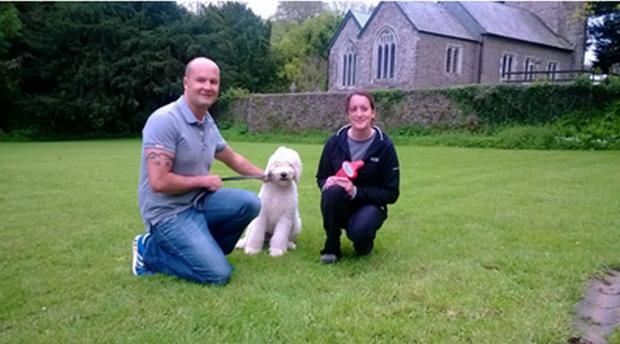 Free microchipping at dog training evenings