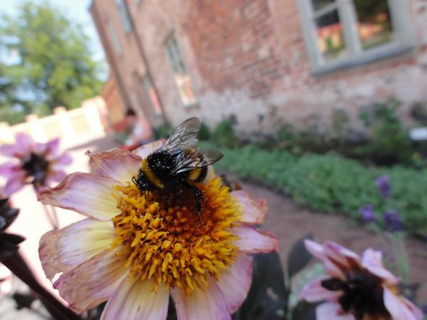 Bees able to spot which flowers offer best rewards before landing, new Exeter University research shows.
